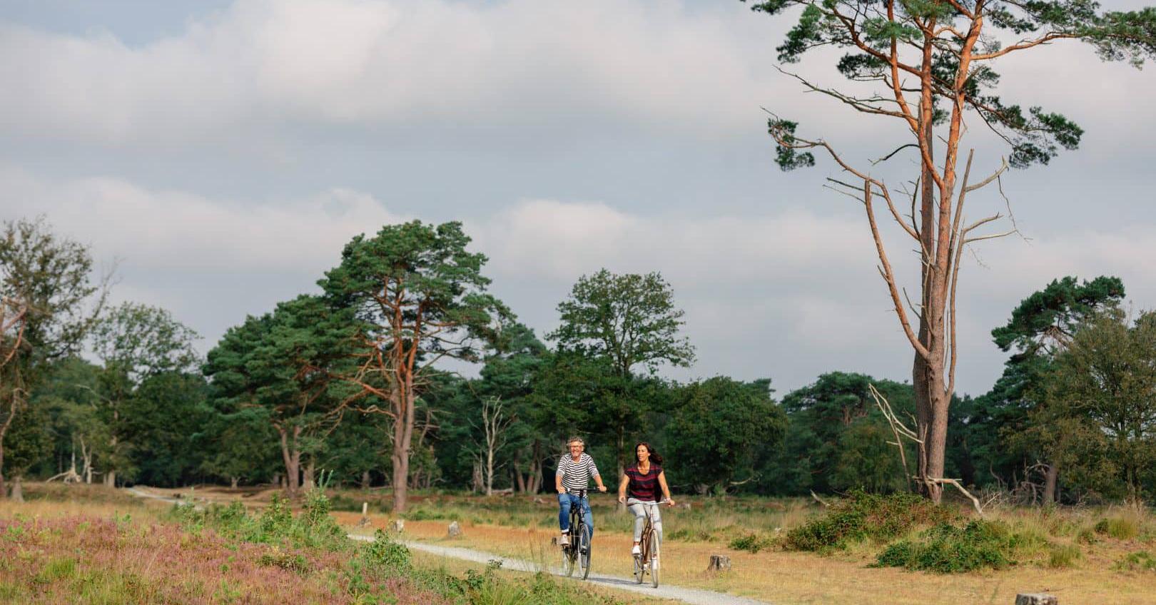 Het Nationale Park Van Drenthe – Dwingelderveld